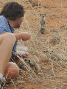 Stuart and Guiness (the most distant meerkat...)