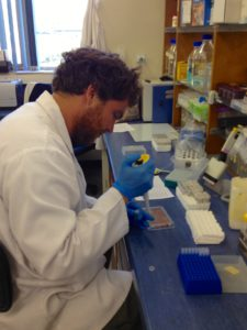Processing samples at the lab involved learning new laboratory skills this year. Here, Stuart can be seen pipetting blood samples onto a test plate.